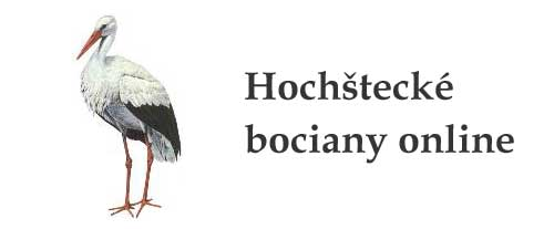 Online sledovanie Hochšteckých bocianov