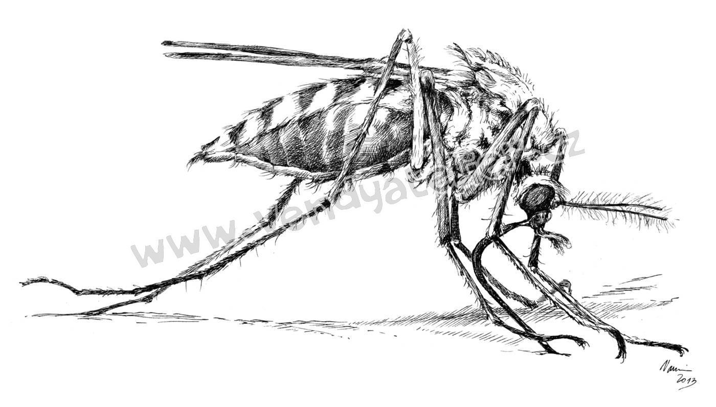 Upozornenie - pozemný postrek proti komárom !