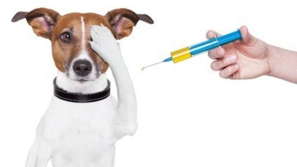 POZOR ZMENA - Povinné očkovanie psov proti besnote 7.6.2020